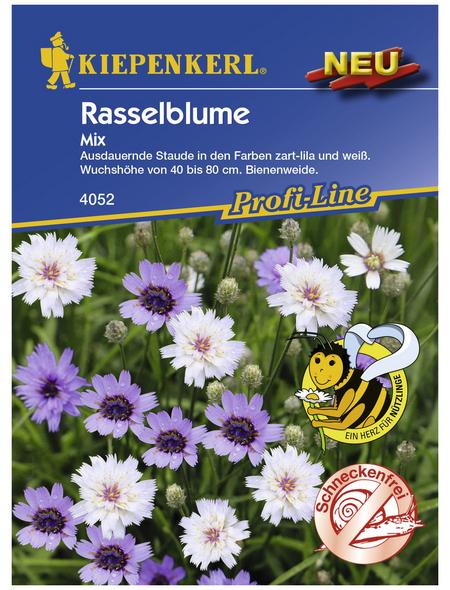 KIEPENKERL Rasselblume, Catanache caerulea, Samen, Blüte: mehrfarbig