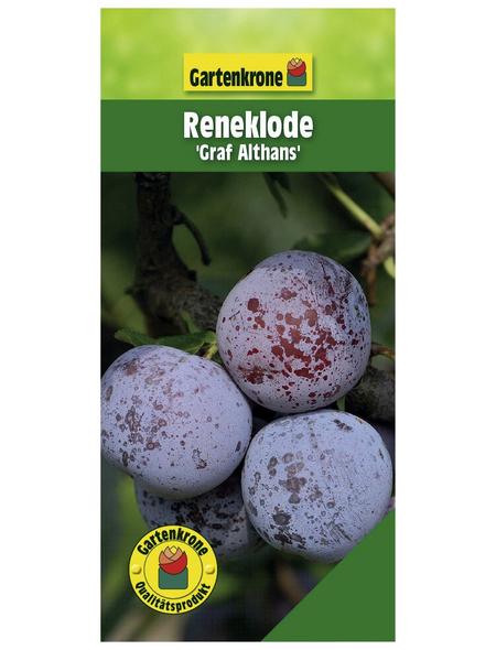 GARTENKRONE Reneklode, Mirabelle, Prunus domestica »Graf Althans«, Früchte: süß-säuerlich, zum Verzehr geeignet