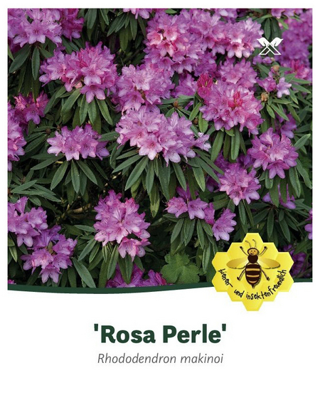 Rhododendron makinoi »Rosa Perle«, rosa, Höhe: 30 - 40 cm