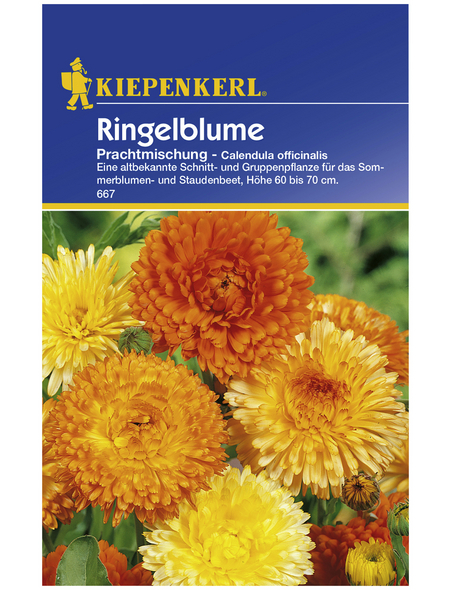 KIEPENKERL Ringelblume, Calendula officinalis, Samen, Blüte: mehrfarbig