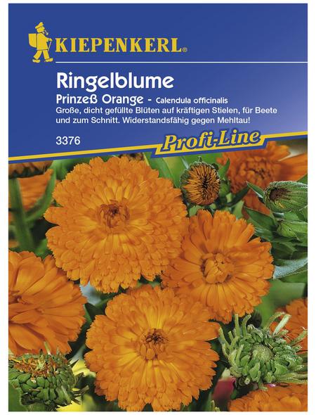 KIEPENKERL Ringelblume, Calendula officinalis, Samen, Blüte: orange