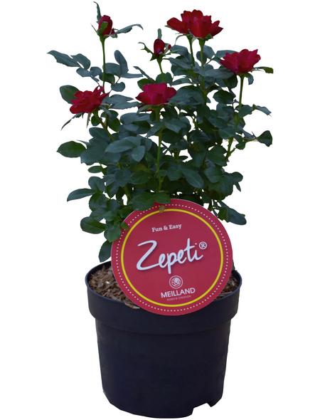 Zepeti® Rose