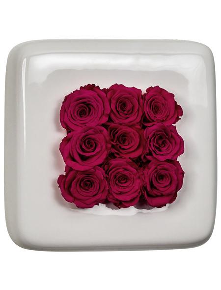 Rosen in Keramik »Infinity-Bloom«,  Chest, weiss/berry, BxHxT: 16 x 16 x 9  cm