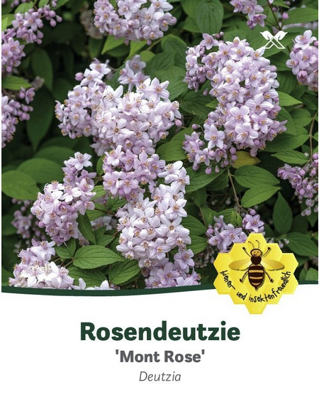 Rosendeutzie, Deutzia hybrida »Mont Rose«, Blütenfarbe rosa