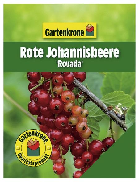 GARTENKRONE Rote Johannisbeere, Ribes rubrum »Rovada« Blüten: weiß, Früchte: rot, essbar