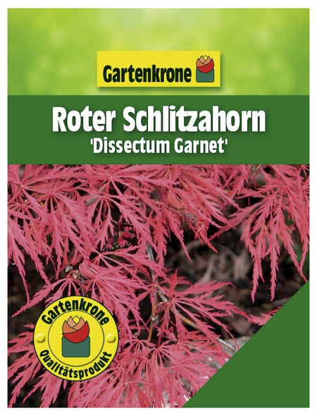GARTENKRONE Roter Schlitzahorn, Acer palmatum »Dissectum Garnet«, winterhart