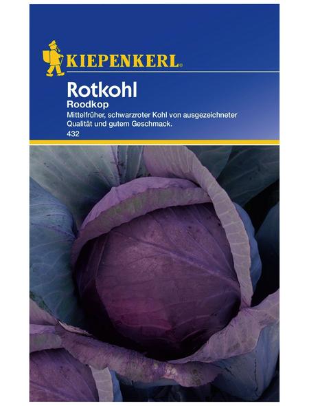 KIEPENKERL Rotkohl oleracea var. capitata f. rubra Brassica »Roodkop«