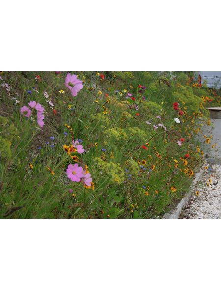 GLAESERGREEN Saatgut »Blumenwiese-Patch«