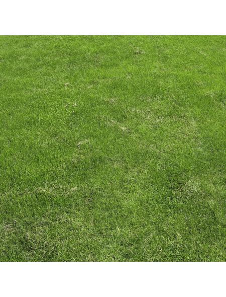 Saatgutmatte »Trockenrasen«, Bio-Qualität