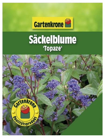 GARTENKRONE Säckelblume, Ceanothus delilianus »Topaze«, blau, winterhart