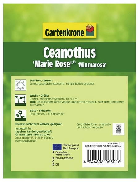 GARTENKRONE Säckelblume, Ceanothus pallidus »Marie Rose«, Blütenfarbe blau