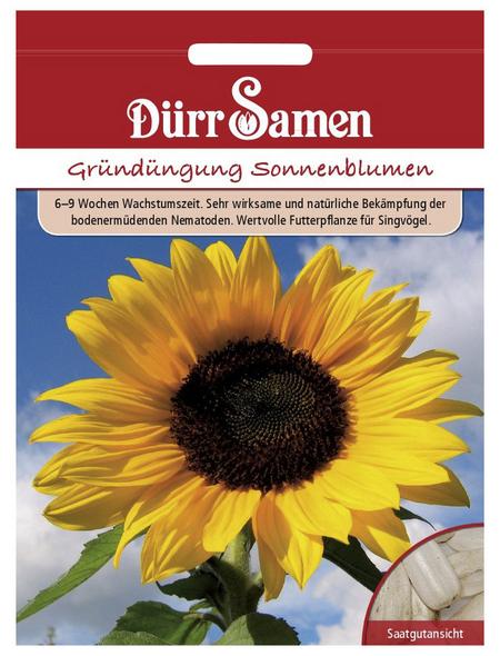 DÜRR SAMEN Samen Gründüngung Sonnenblumen
