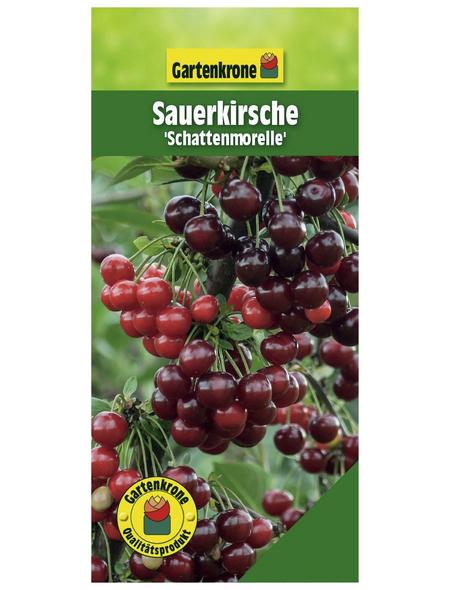 GARTENKRONE Sauerkirsche, Prunus cerasus »Schattenmorelle«, Früchte: süß-säuerlich, zum Verzehr geeignet