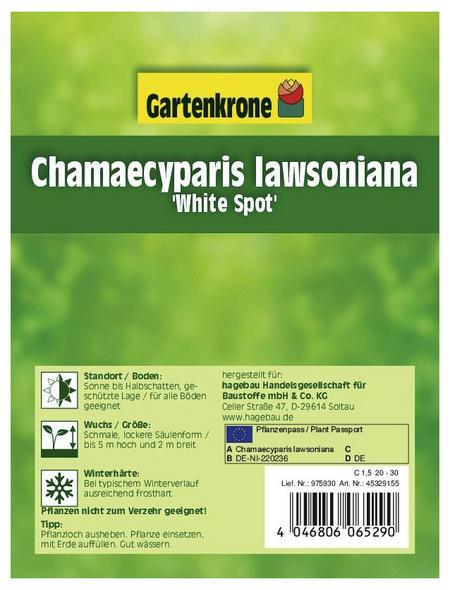 GARTENKRONE Scheinzypresse, Chamaecyparis lawsoniana »White Spot«, winterhart