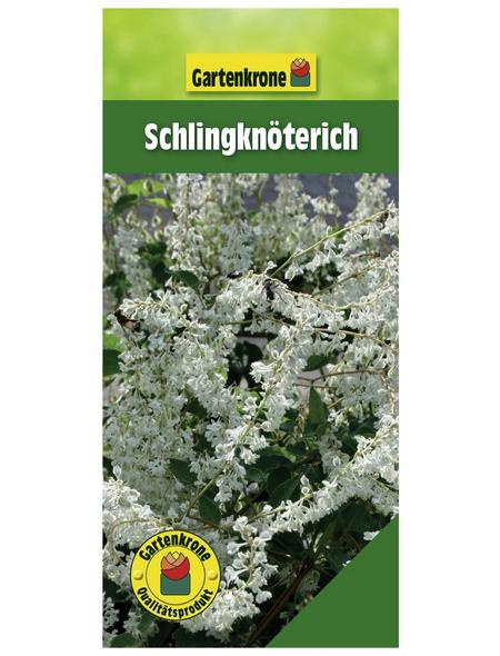 GARTENKRONE Schlingknöterich, Polygonum aubertii, weiß, winterhart