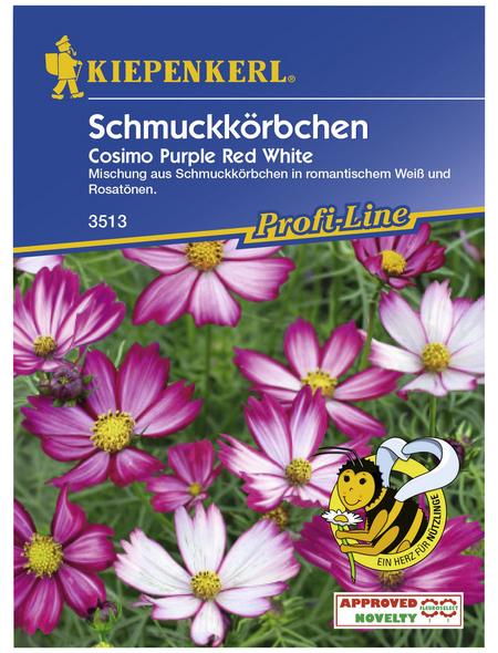 KIEPENKERL Schmuckkörbchen, Cosmos bipinnatus, Samen, Blüte: pink/weiß