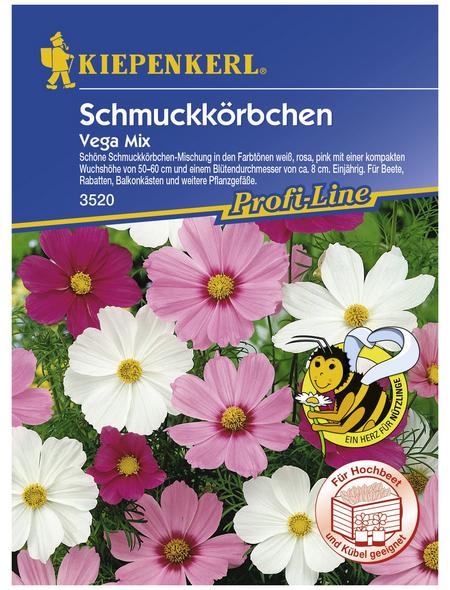 KIEPENKERL Schmuckkörbchen, Valerianella locusta, Samen, Blüte: mehrfarbig