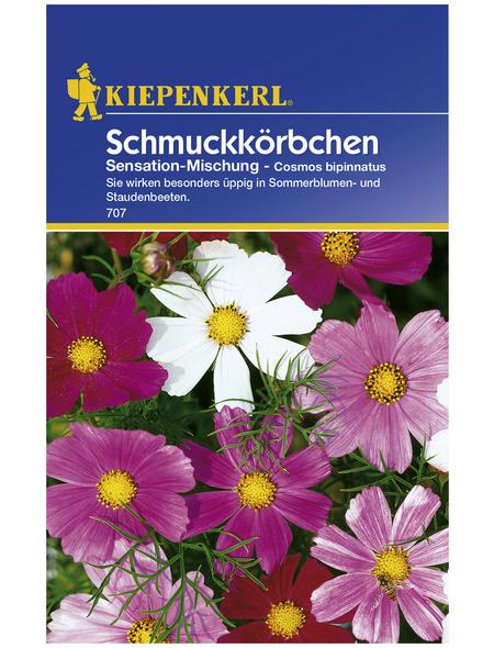 KIEPENKERL Schmuckkörchen, Cosmos bipinnatus, Samen, Blüte: mehrfarbig