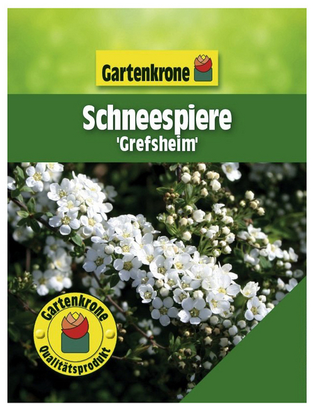 GARTENKRONE Schneespiere, Spiraea cinerea »Grefsheim«, weiß, winterhart