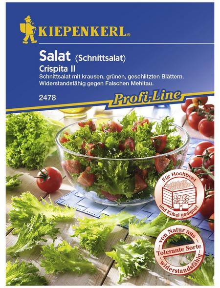 KIEPENKERL Schnittsalat sativa var.crispa Lactuca