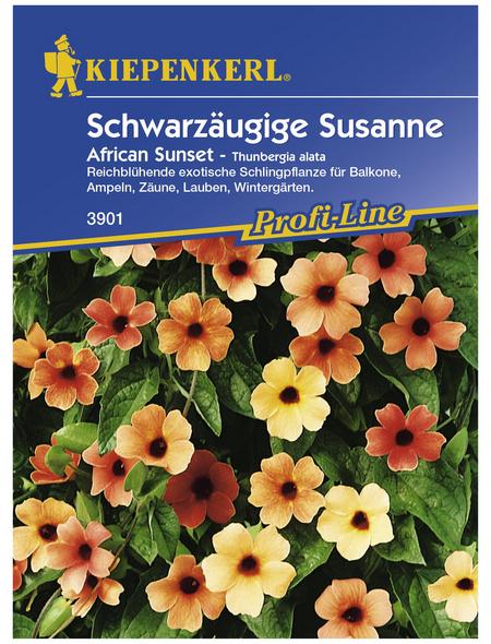 KIEPENKERL Schwarzäugige Susanne, Thunbergia alata, Samen, Blüte: mehrfarbig