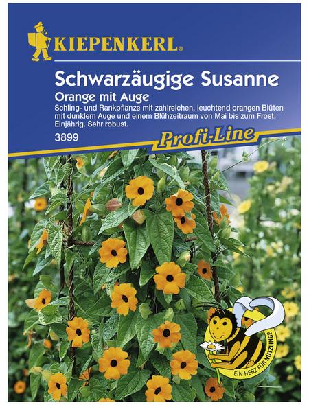 KIEPENKERL Schwarzäugige Susanne, Valerianella locusta, Samen, Blüte: orange