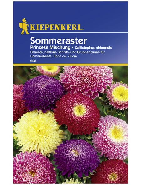 KIEPENKERL Sommeraster, Callistephus chinensis, Samen, Blüte: mehrfarbig