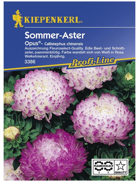 KIEPENKERL Sommeraster, Callistephus chinensis, Samen, Blüte: pink/weiß