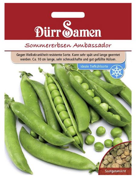 DÜRR SAMEN Sommererbsen sativum Pisum »Ambassador«