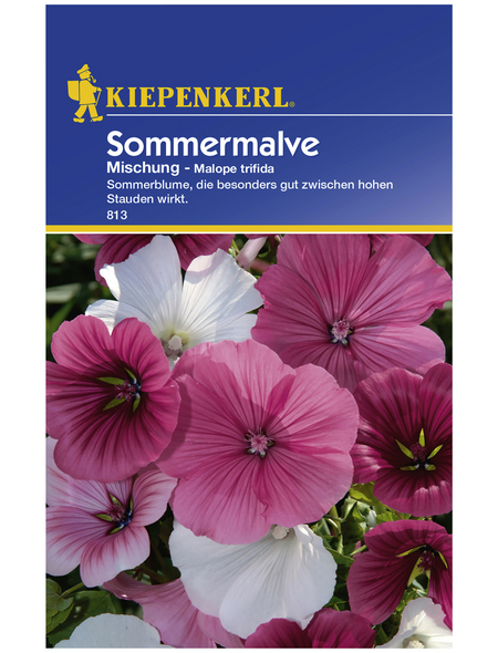 KIEPENKERL Sommermalve, Malope trifida, Samen, Blüte: mehrfarbig