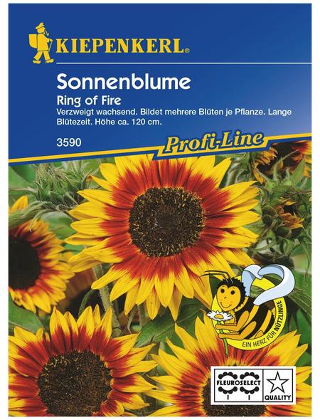 KIEPENKERL Sonnenblume, Helianthus annuus »Ring of Fire«, Samen, Blüte: mehrfarbig