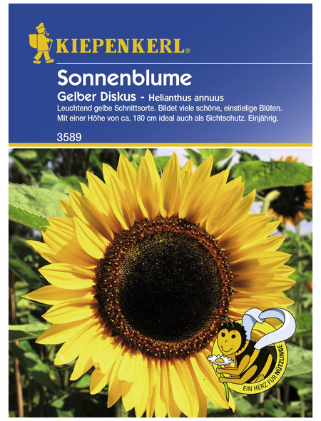 KIEPENKERL Sonnenblume, Helianthus annuus, Samen, Blüte: gelb
