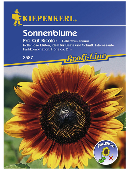 KIEPENKERL Sonnenblume, Helianthus annuus, Samen, Blüte: mehrfarbig