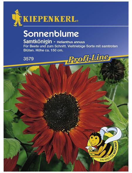 KIEPENKERL Sonnenblume, Helianthus annuus, Samen, Blüte: rot
