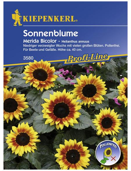 KIEPENKERL Sonnenblume, Helianthus annuus, Samen, Blüte: weiß