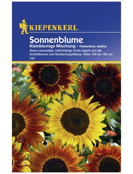 KIEPENKERL Sonnenblume, Helianthus debilis, Samen, Blüte: mehrfarbig