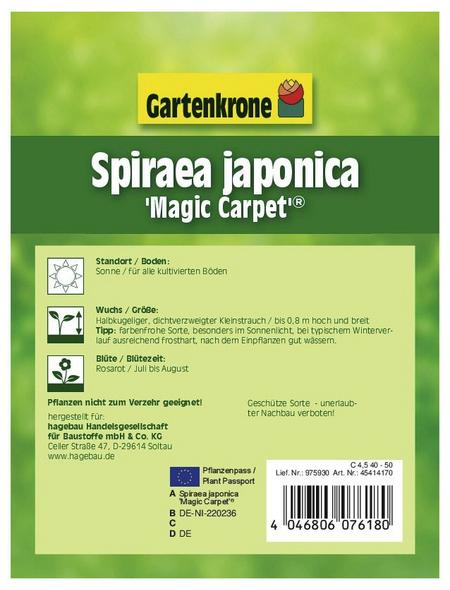 GARTENKRONE Spierstrauch, Spiraea japonica »Magic Carpet«, rosa/pink, winterhart