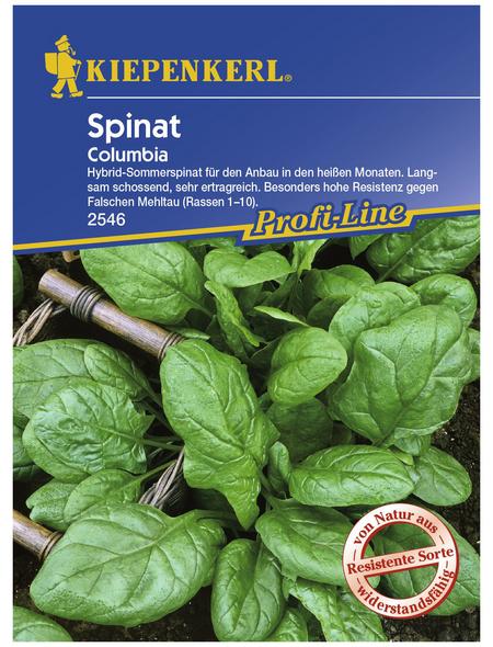 KIEPENKERL Spinat oleracea Spinacia »Columbia«
