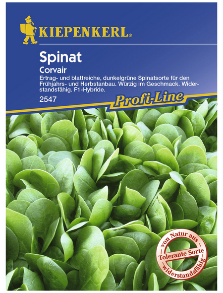 KIEPENKERL Spinat oleracea Spinacia »Corvair«