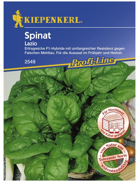 KIEPENKERL Spinat oleracea Spinacia »Lazio«