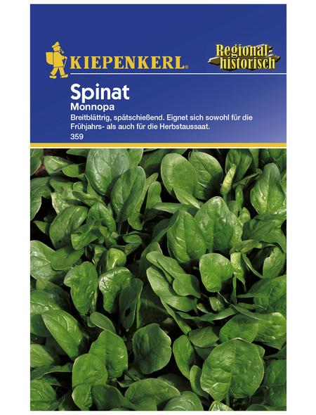 KIEPENKERL Spinat oleracea Spinacia »Monnopa«