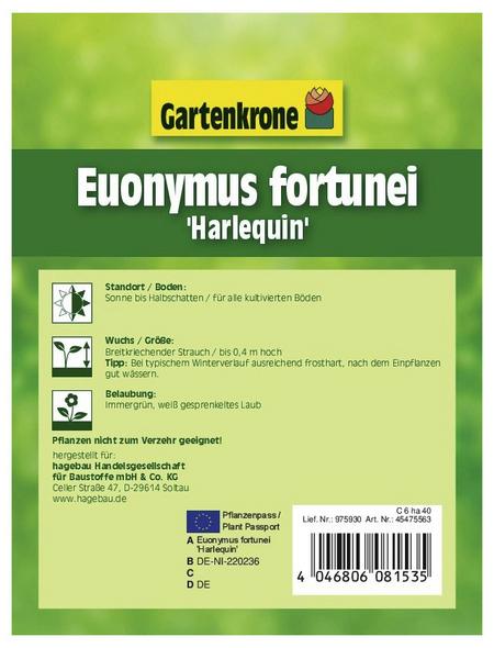 GARTENKRONE Spindelstrauch, Euonymus fortunei »Harlequin«, winterhart