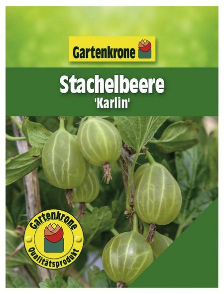 GARTENKRONE Stachelbeere Ribes uva-crispa »Karlin«