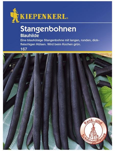 KIEPENKERL Stangenbohne vulgaris var. vulgaris Phaseolus »Blauhilde«