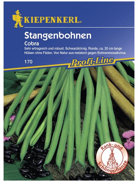 KIEPENKERL Stangenbohne vulgaris var. vulgaris Phaseolus »Cobra«