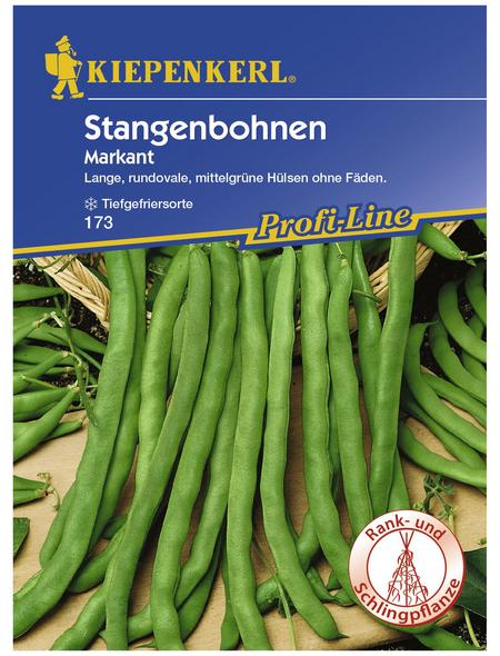 KIEPENKERL Stangenbohne vulgaris var. vulgaris Phaseolus »Markant«