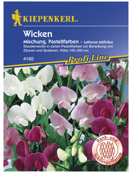 KIEPENKERL Staudenwicke, Lathyrus latifolius, Samen, Blüte: mehrfarbig