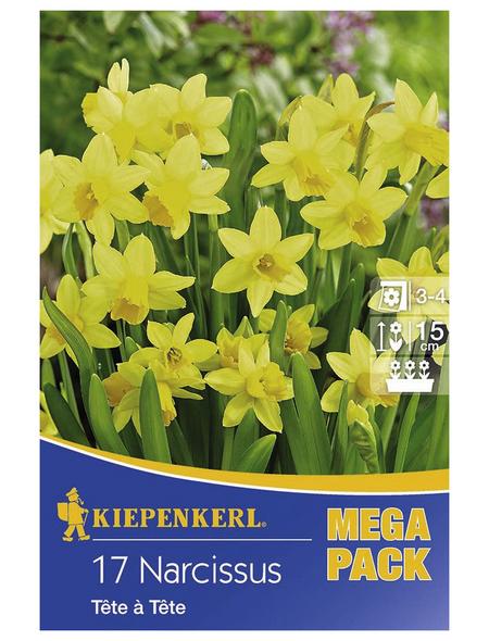 KIEPENKERL Steingarten-Narzisse cyclamineus Narcissus