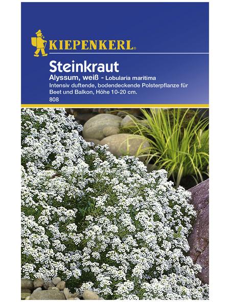 KIEPENKERL Steinkraut, Lobularia maritima, Samen, Blüte: weiß