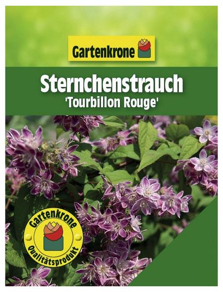GARTENKRONE Sternchenstrauch, Deutzia magnifica »Tourbillon Rouge«, rosa/pink, winterhart